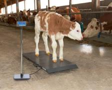PS весы для животных PS1000 до 500 кг